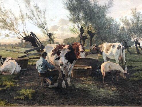 Koeien-melken-in-de-wei